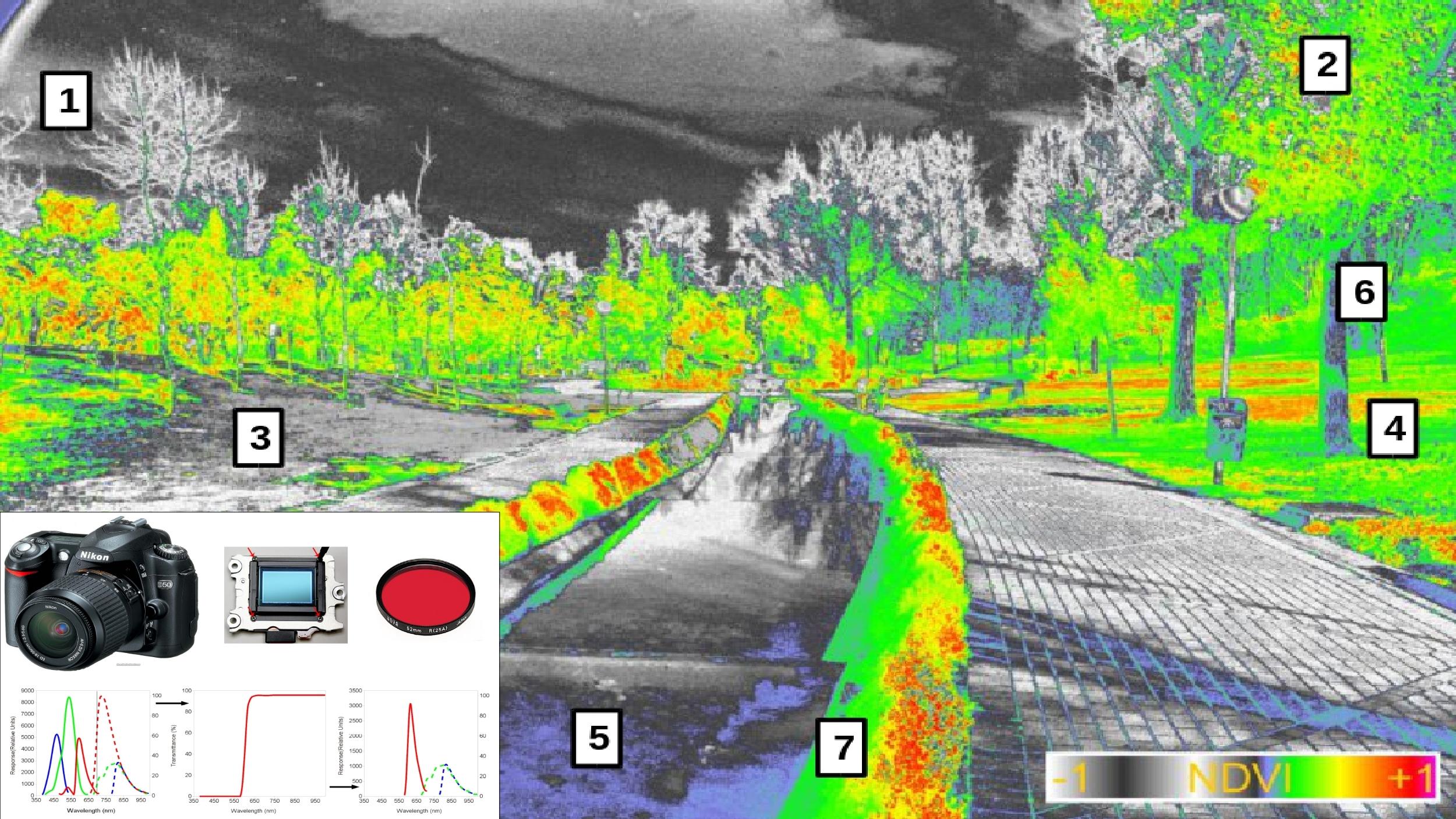 Una técnica desarrollada en la UEx permite medir la actividad fotosintética de las plantas utilizando una cámara fotográfica convencional